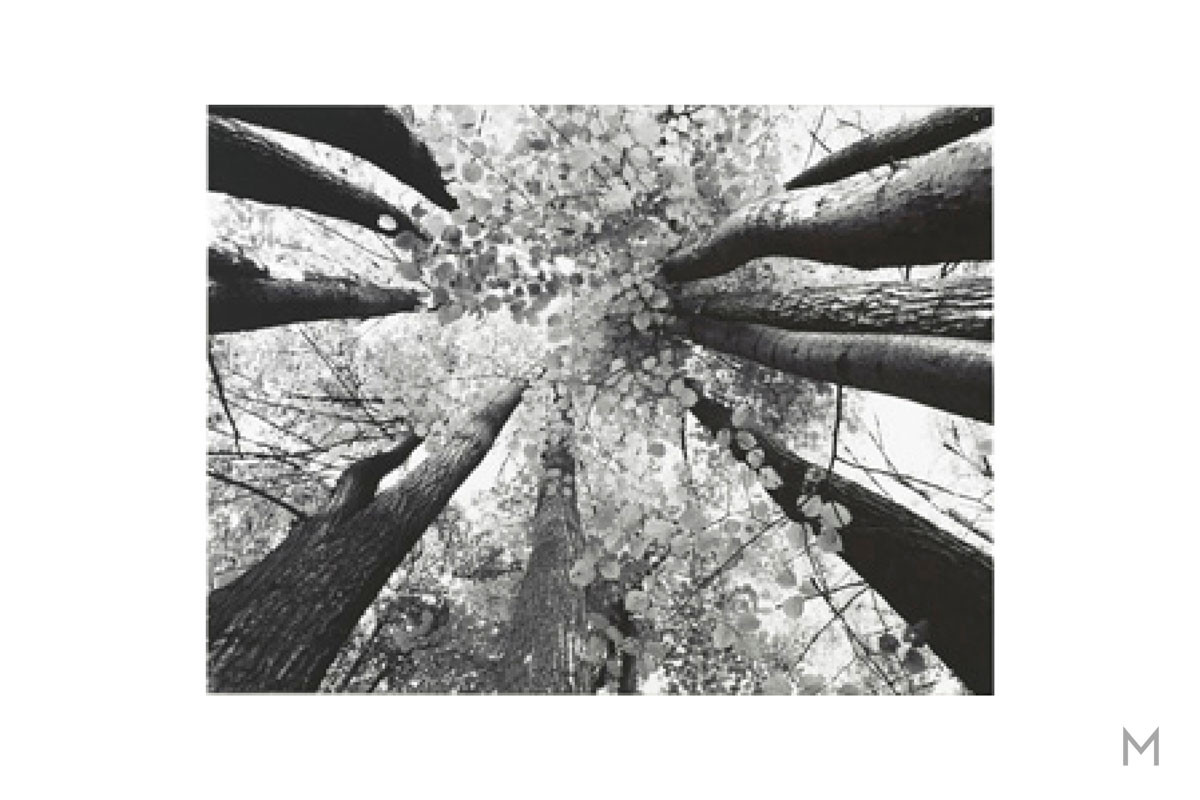 Black and White Trees Wall Art on Cavas