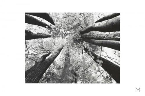 Black and White Trees Wall Art on Cavas
