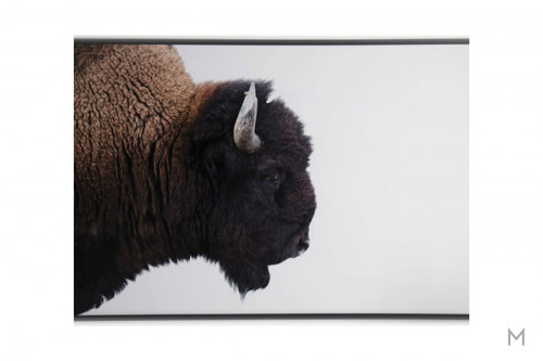 American Bison Wall Art